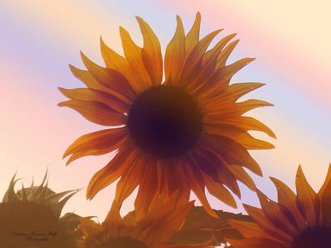 Darlene Bell - Morning Sunflower
