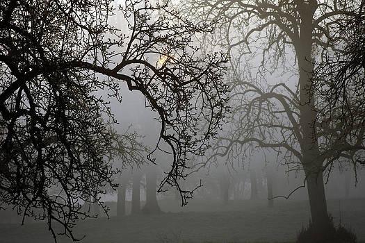 Morningmist by Erik Tanghe