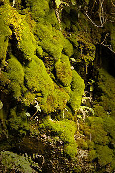 Moss Face by Don Krajewski
