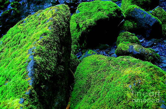 Moss In Blue by Michael Wyatt