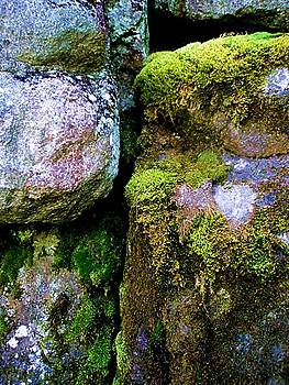 Moss on Rocks by Bridget Johnson