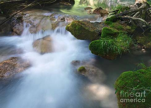 Moss on the Water by Alfredo Rodriguez