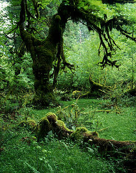 Moss on Trees Rain Forest by John Wolf