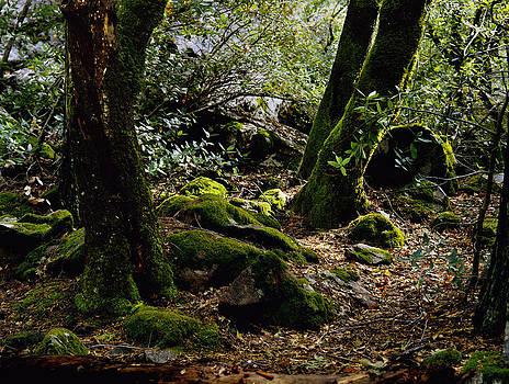 Moss on Trees Yosemite by John Wolf