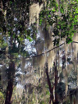 Moss Tree by Dulce Levitz