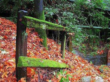 Mossy Fence by Rick Mutaw