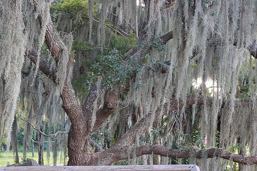Mossy Moss Oak by Mike Wilber