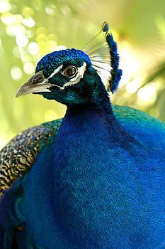 Carmen Del Valle - Most Beautiful Bird