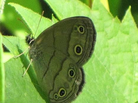 Moth on a Mission by Harry Wojahn