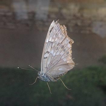 #moth Sitting On The Window by Bella Guzman