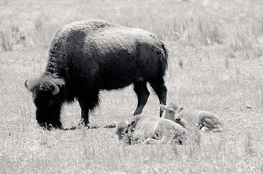 Julie Niemela - Mother and Baby Buffalos