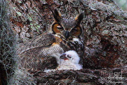 Barbara Bowen - Mother and baby owl