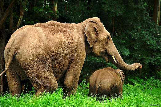 Mother and Child by Vinod Nair