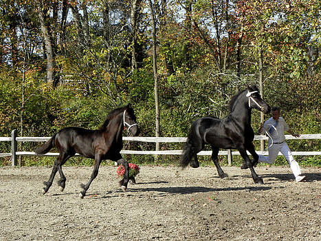 Mother and Son competing by Kim Galluzzo Wozniak