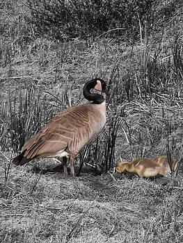 Stuart Turnbull - Mother Goose 1