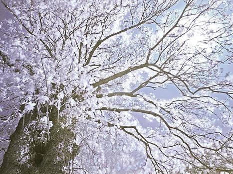 Mother Nature by Domagoj Borscak