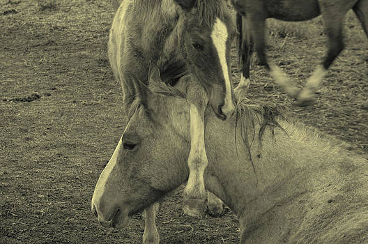 Mothers Love by Roy Bozarth