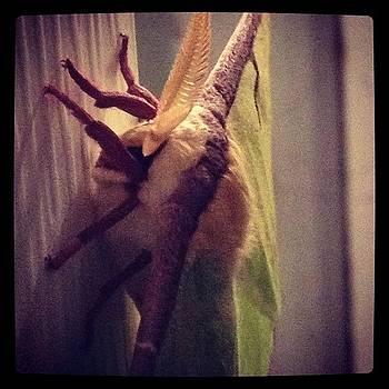 Mothra Cane To Visit My House. I Won't by Jeff Madlock