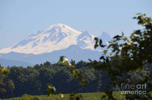James E Weaver - Mount Baker 1