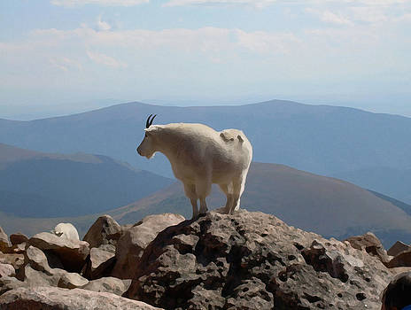 Mount Evan's Goat by Bill Kennedy