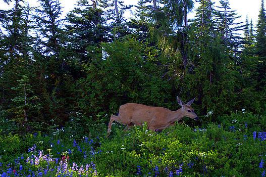 Lynn Bawden - Mount Rainier Deer