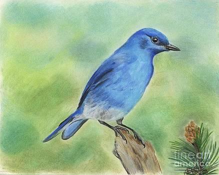 Christian Conner - Mountain Bluebird