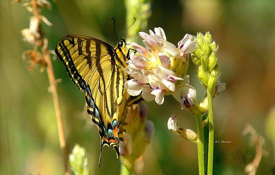 Mountain Butterfly by RJ Martens