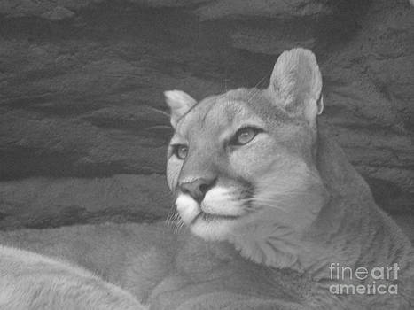 Mountain Lion in Black and White by Donna Parlow