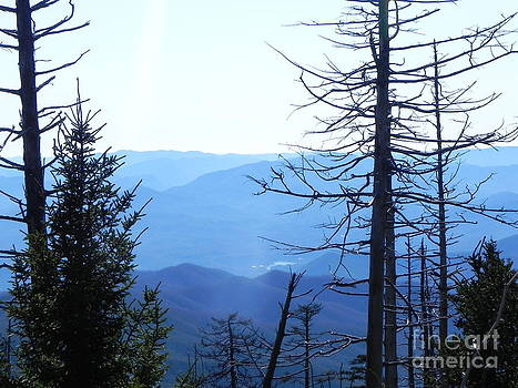 Mountain Majestic by Sandy Owens