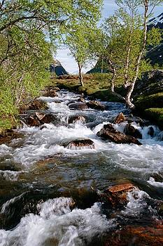 Mountain Stream by Barbara Allm