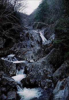 Mountain Stream by David Campbell