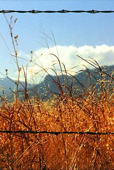 Mountain Wheat with Barbwire by Jaye Crist