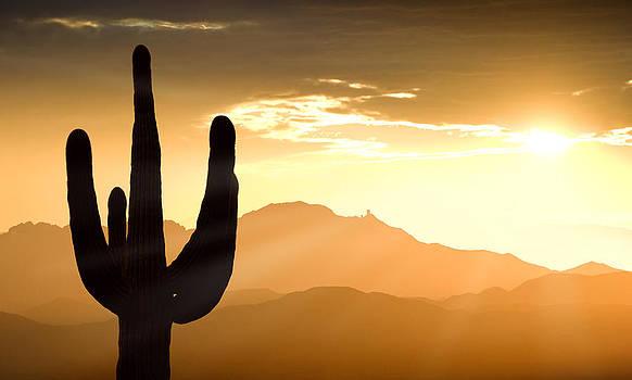 Mountains saguaro cactus and Kitt Peak at sunset by Bryan Allen