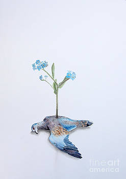 Mourning Dove and Forget-Me-Nots by Sarah Mushong