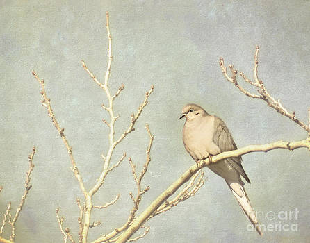 Mourning dove in winter by Cindy Garber Iverson