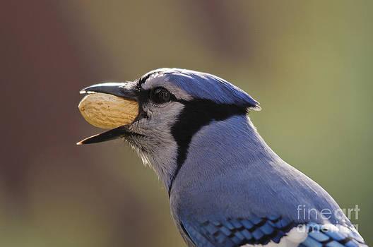 Mouthful or Beakful.... by Christine Kapler