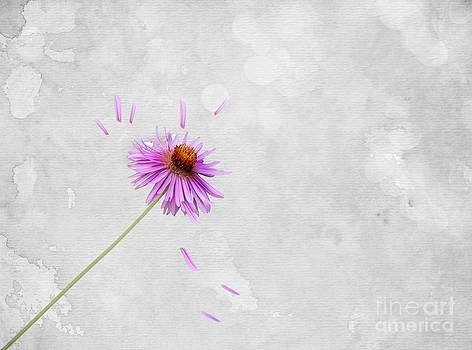 Movement by Anne Seltmann