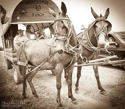 Mules by Sheri Bartay