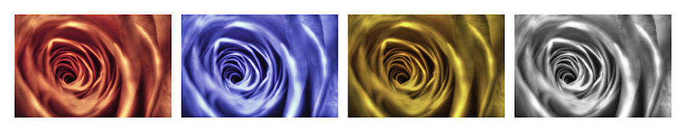 Nigel Jones - Multi-coloured Roses
