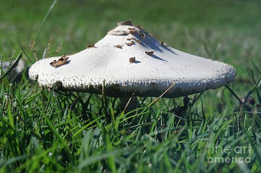 Mushroom by Nicholas Pena