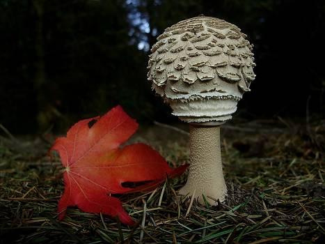Mushroom by Nikola Lackovic