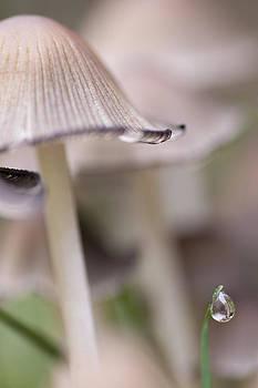 Sue OConnor - Mushroom V