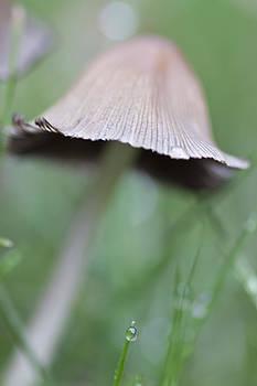 Sue OConnor - Mushroom VI