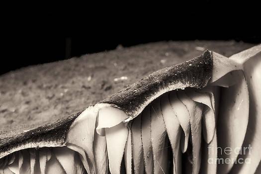 Darcy Michaelchuk - Mushroom Wafers