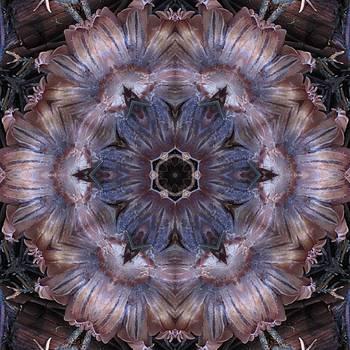 Mushroom with Blue Center by Trina Stephenson