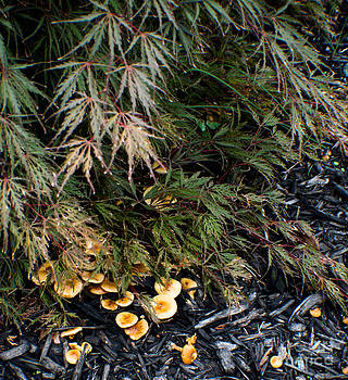 Mushrooms in the mulch by Anne Boyes