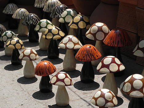 Mushrooms by Jesus Nicolas Castanon