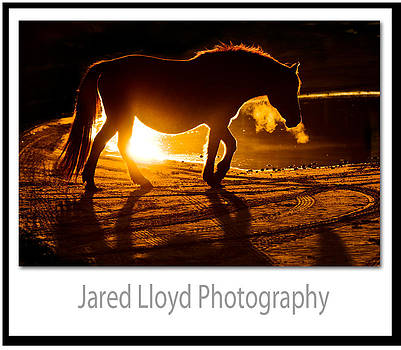 Mustang at the Edge of Light by Jared Lloyd