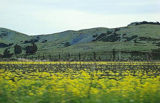 Mustard Hills by Michelle Claudio