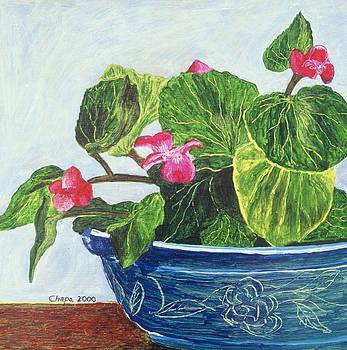 My Begonias by Manny Chapa